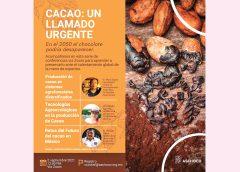 Fortalecer el valor económico y cultural del cacao y el chocolate: un reto para México
