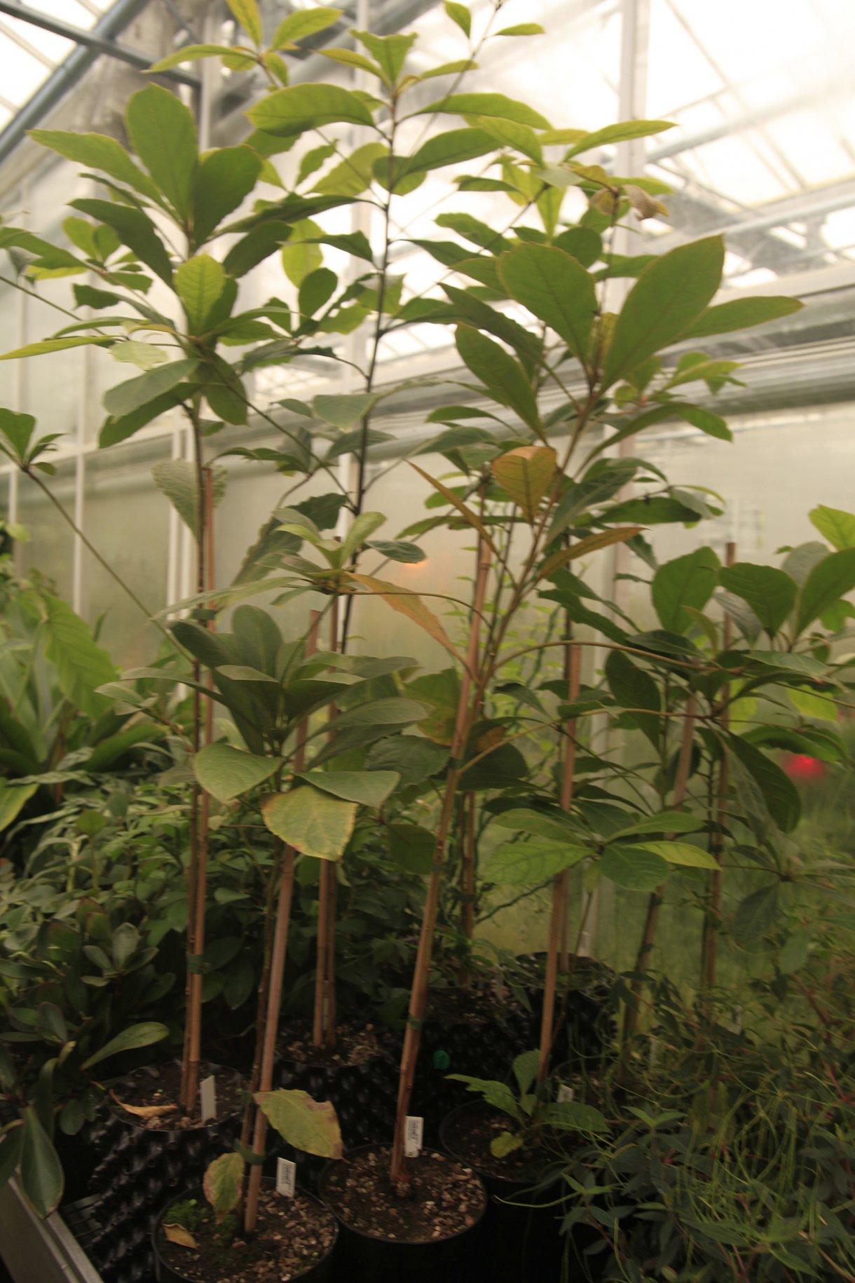 Seedlings  Ackroyd  Harvey  Conflicted Seeds  Spirit  Cambridge