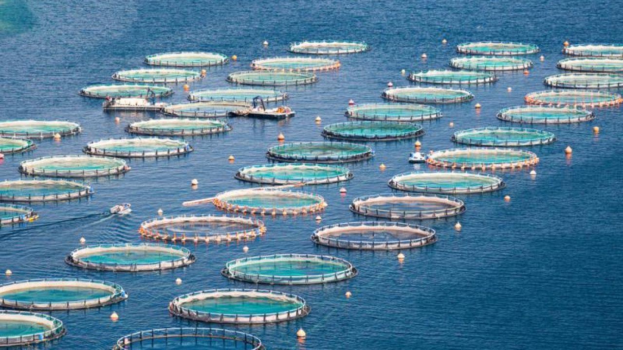 COVID-19 | Ecco le nuove misure europee per il sostegno a pesca e  acquacoltura - CONFSAL PESCA