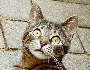 512px-Surprised_young_cat
