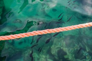 rope over green water