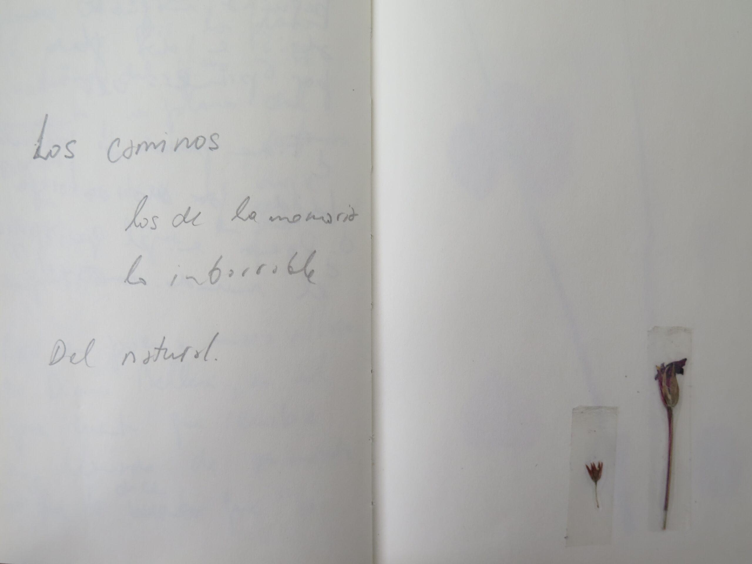 LA CASA DEL CINEASTA: DEL NATURAL (01)
