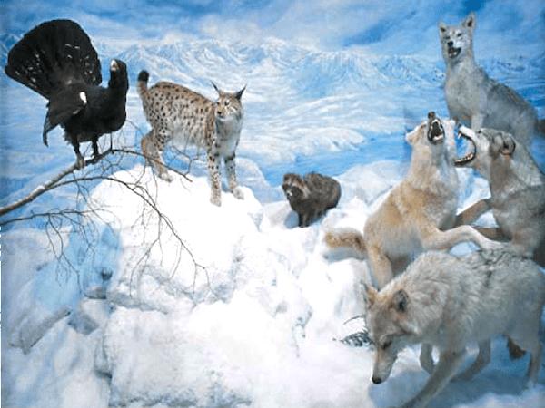 Museo de fauna salvaje de Boar Len
