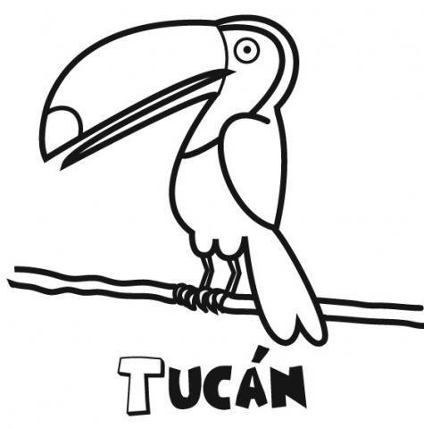 Tucán: Dibujos para colorear