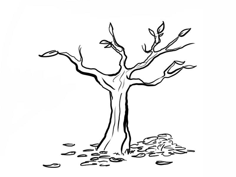 Arboles Imprimir Con Y De Para Dibujos Frutos Raices