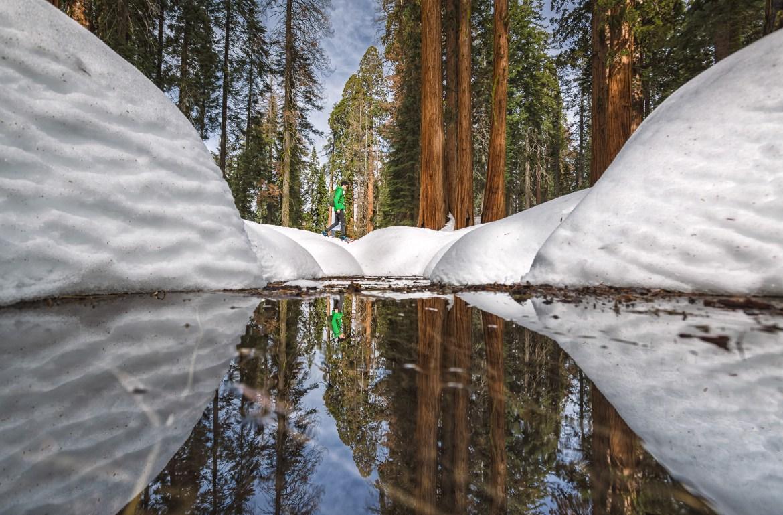 Viaje California - Roadtrip fotografico Conmisojos - Seqcuoias National Park Mountainer Big Trees