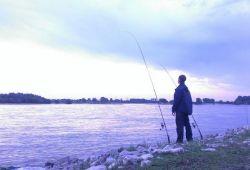 Rheinfischen