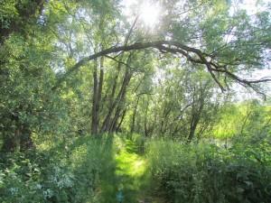 k-Waldweg