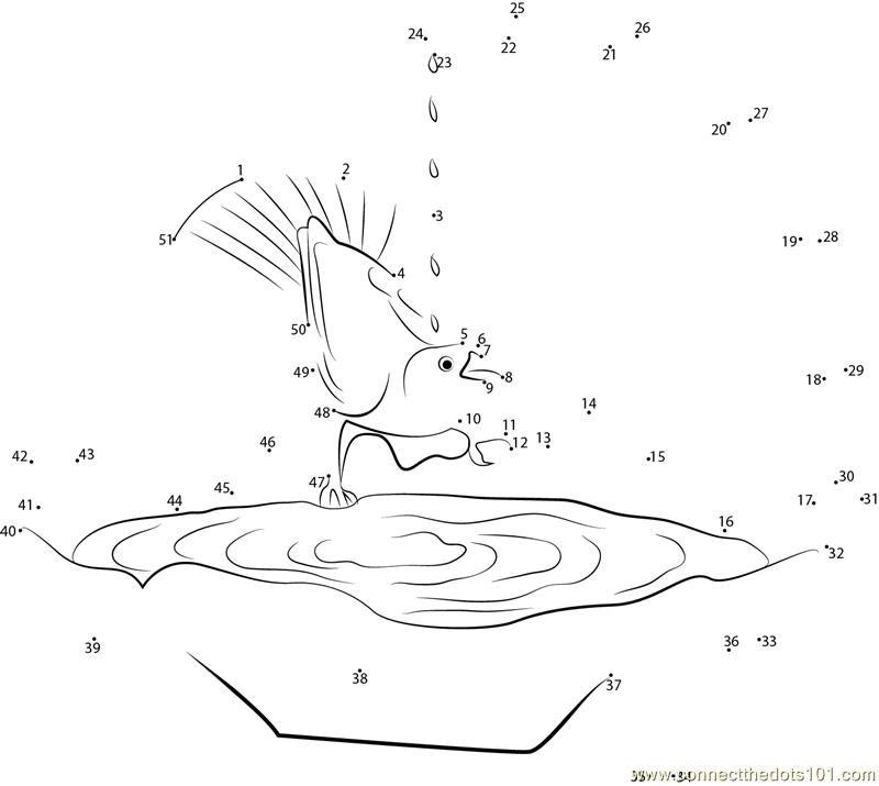 Pond Worksheet