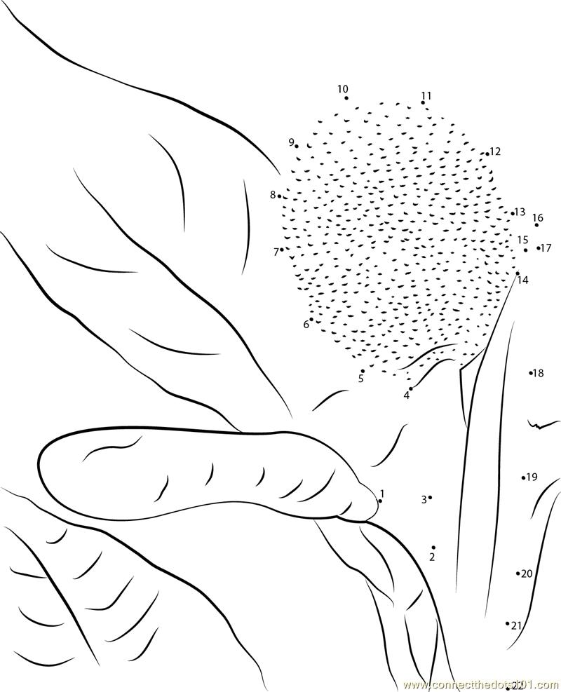 Breadfruit Male Female dot to dot printable worksheet