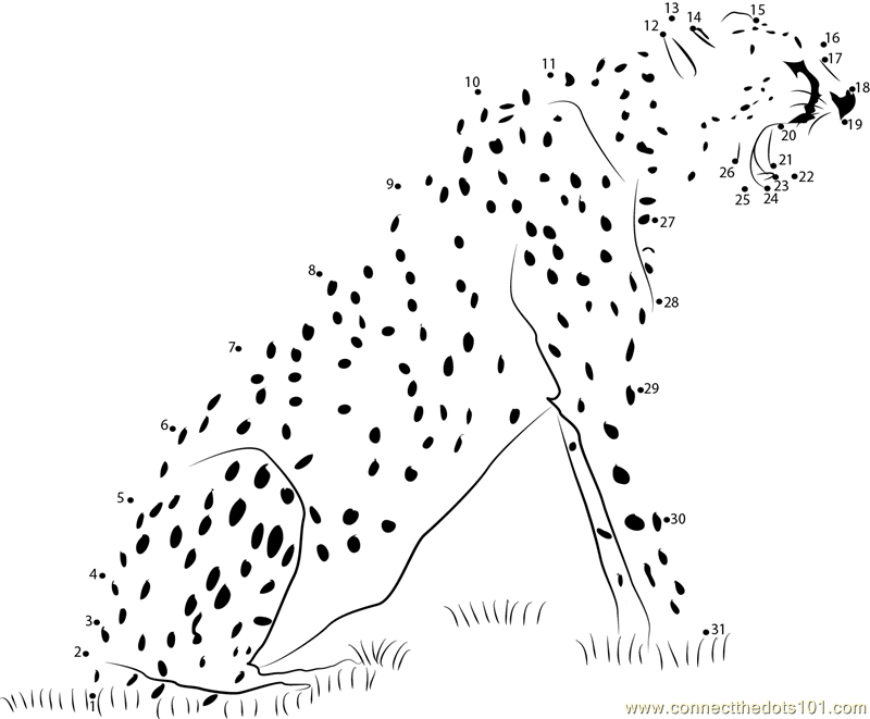 Animal State Cheetah dot to dot Printable Worksheet