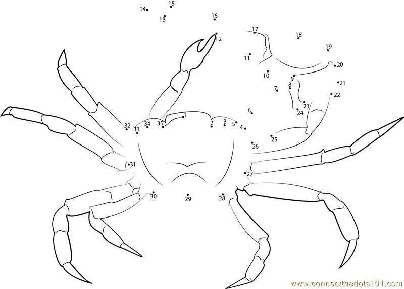 Gulf Mud Fiddler Crab dot to dot printable worksheet