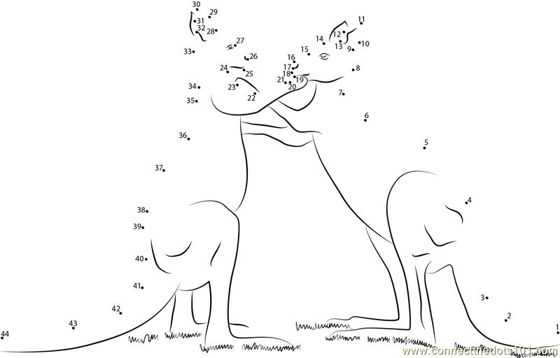 Kangaroo Play Fighting Dot To Dot Printable Worksheet