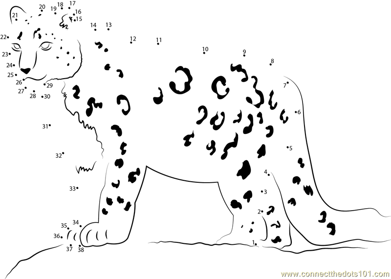 Snow Leopard Looking His Food dot to dot printable