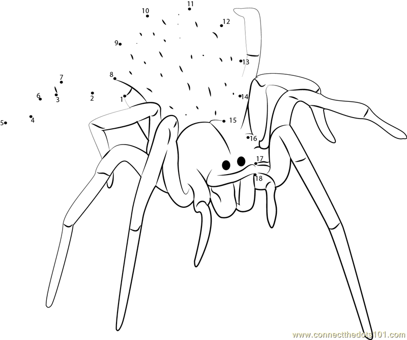 Blackhouse Spider (Australia) dot to dot printable