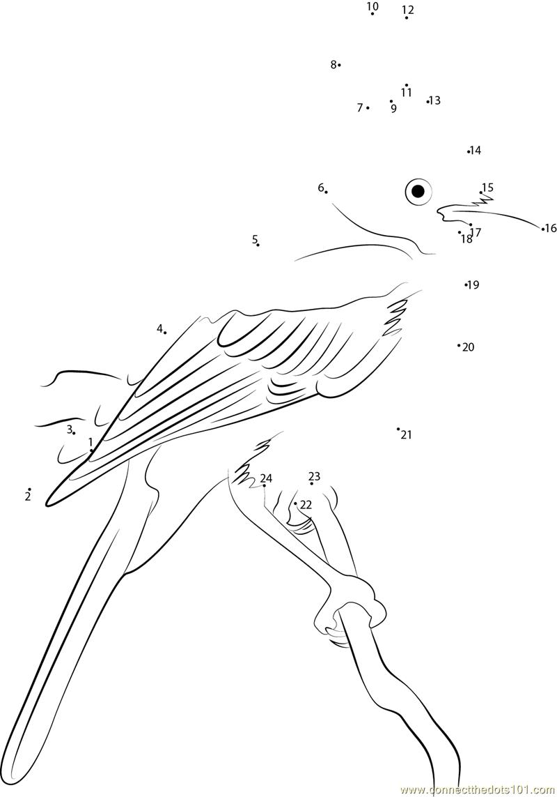 Hang on Tree Steller's Jay dot to dot printable worksheet