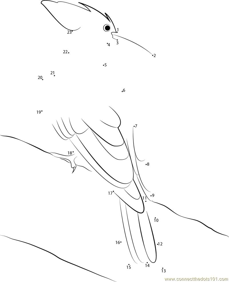 Picidae Dot To Dot Printable Worksheet