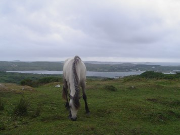 Get in touch with the Connemara Horses clifden