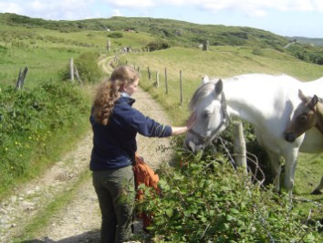 Get in touch with the Connemara Horses clifden1