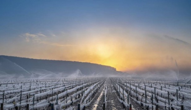 Freezing vines. France declares 'calamité agricole' after record cold: What is it?