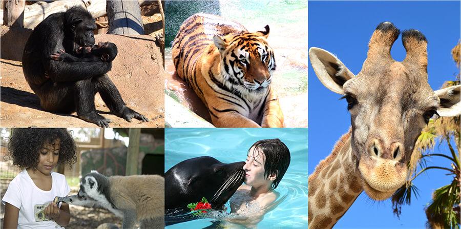 Safaris y Zoos de la provincia de Alicante