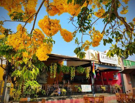 La Vainilla Restaurantes en Manzanillo