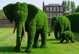 Estilos y dise os para jardines cursos gratis for Tipos de arbustos ornamentales