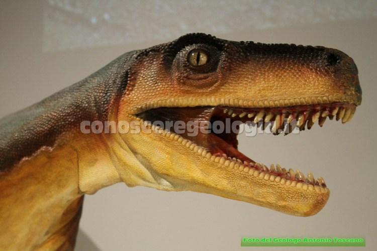 Ricostruzione dell'Herrerasaurus ischigualastensis (Triassico), particolare della testa