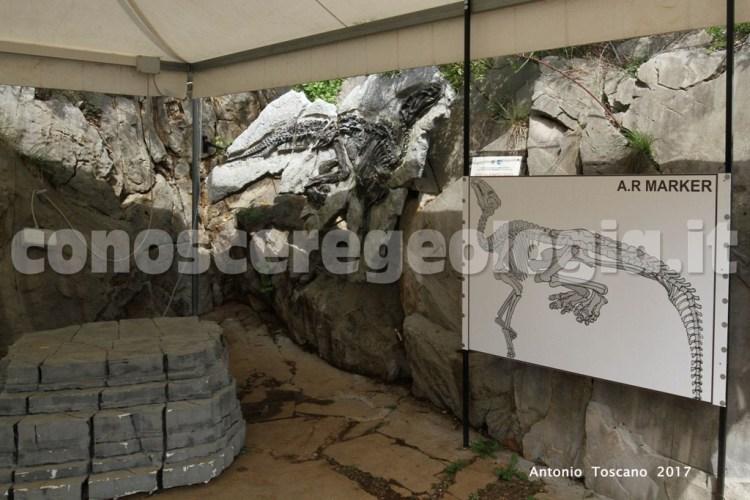 Sito paleontologico in Loc. Villaggio del Pescatore, Duino TS