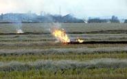 foto 4 - Stoppie incendiate dopo la mietitura