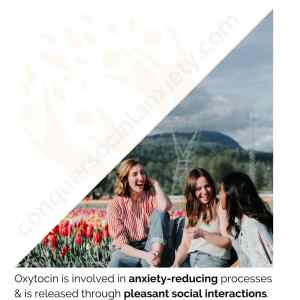Oxytocin is involved in anxiety-reducing processes & is released through pleasant social interactions.