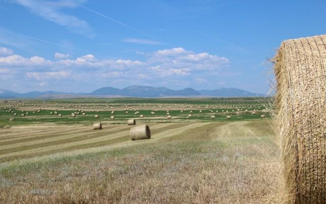 Conrad Agrar Consulting Rundballen in Montana