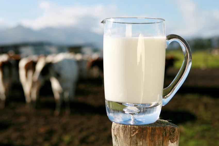 lait de vache