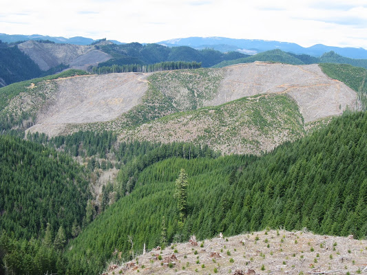 Clear Cutting in Oregon Conscious Connection