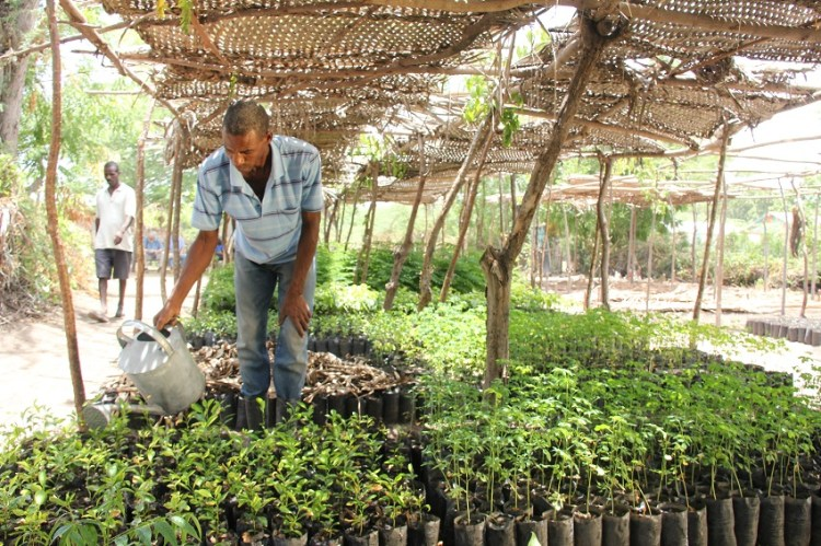 Timberland Sustainable Forestry in Haiti