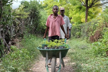 SFA member and his son transport tree seedlings for planting