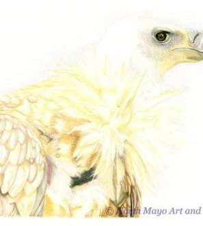 Conscious Crafties Limited Edition print of original coloured pencil drawing 'Vulture'