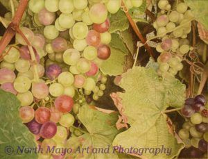 Roz's Grapes on a vine