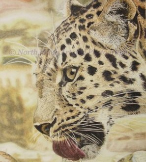 Limited Edition print of original coloured pencil drawing 'Thirsty Leopard'