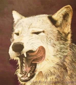 Original coloured pencil drawing 'Hungry Wolf'