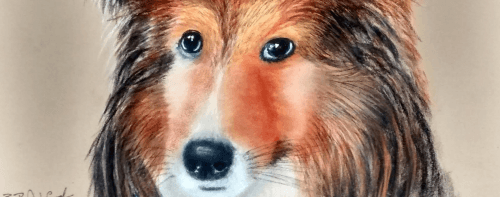 Dog pastel portrait, Bob Ashford