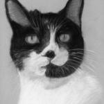 Cat Pastel Portrait, PetsPortraits4u