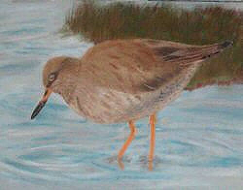 Redshank Duck pastels drawing portrait picture
