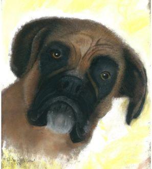 boxer-dog-0001