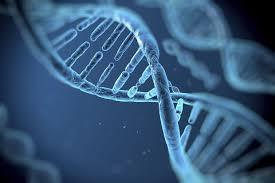 """'Aardse"""" wetenschap: de dubbele spiraal van het DNA brevat de erfelijke informatie bij alles dar keeft."""