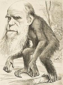 Spotprent van Darwin als aap, uit 1871.