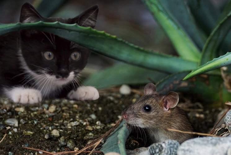 SOS, mon domicile est envahi par les rats !