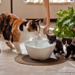 Fontaine à eau pour chat  bonne ou mauvaise idée