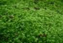 Comment faire un mur végétal artificiel?