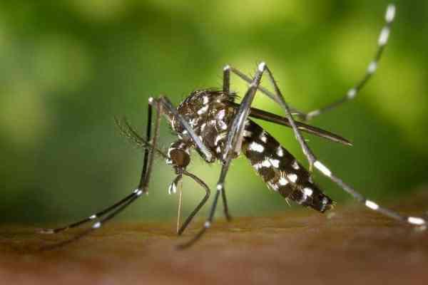 Astuces pour repousser les moustiques